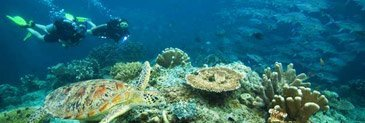 diving gili air