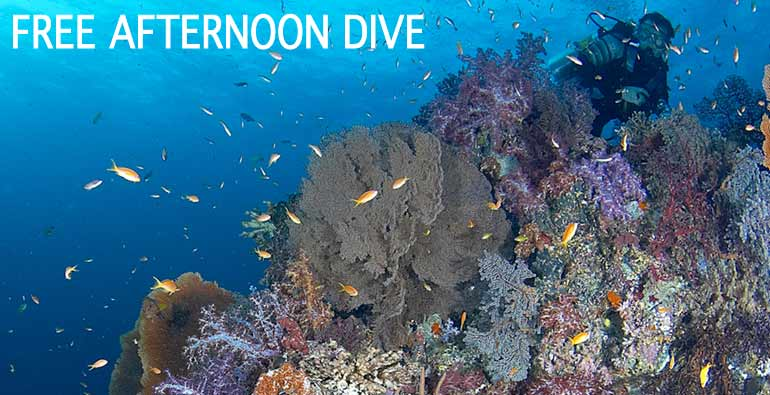 free afternoon dive in Bunaken and Lembeh