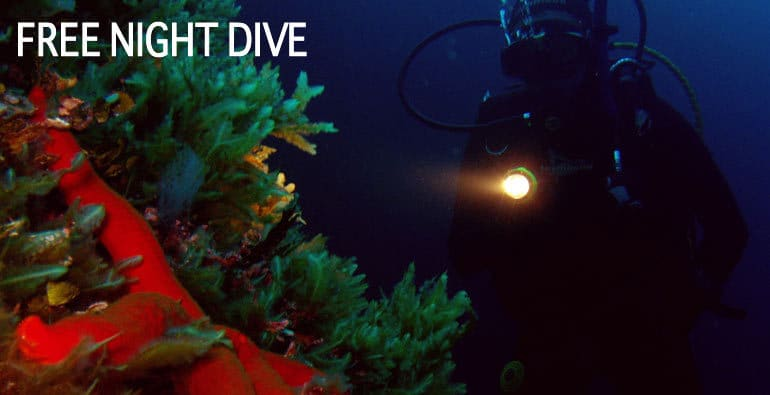 free night dive in bunaken, lembeh or lembongan