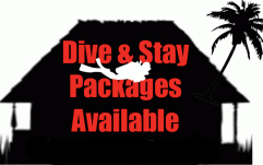 dive-stay-packages-two-fish