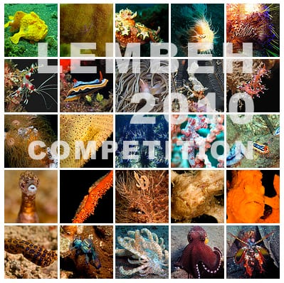 photo competitions