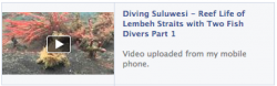 Diving Sulawesi - Reef Life of Lembeh Straits pt1
