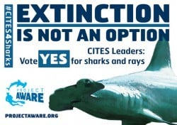 Vote yes for sharks and rays