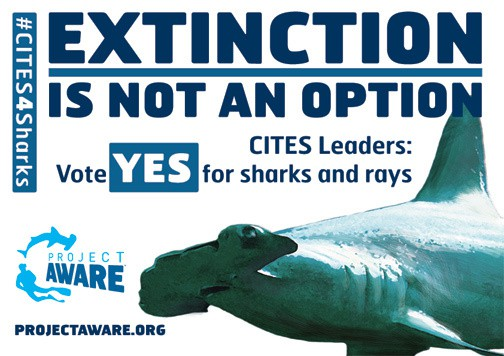 Shout for Sharks with CITES 2013