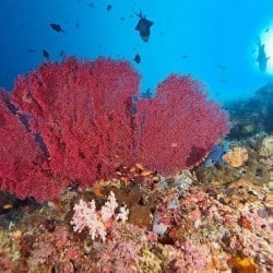 corals in Bunaken 12FEB13