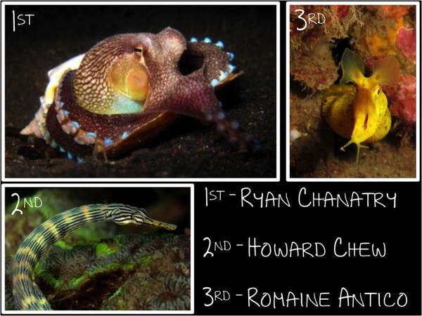 Lembeh photo competition results 2012