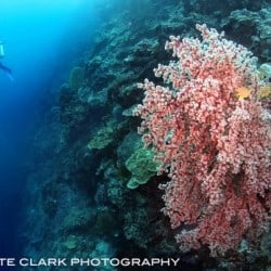 bunaken reef 27MAR13
