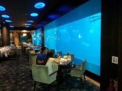 eating with the marine life at singapore aquarium