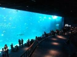 ocean habitat singapore aquarium