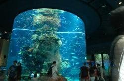 sea aquarium singapore aquarium