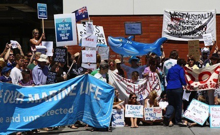 premier protest to stop the shark cull