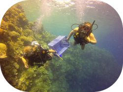 Two Fish Bunaken Dive COTs