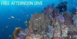 free afternoon dive