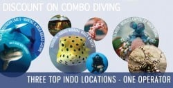 discount on dive/accomm packages in June