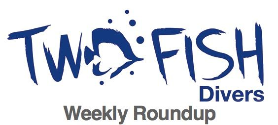 Two Fish Divers weekly update Peeing in your wetsuit, sargassums and octopi