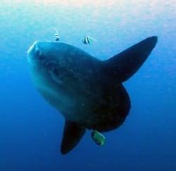 Mola Mola Mola Mola Mola