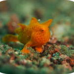 COOLER WATERS MEANS COOL CRITTERS IN LEMBEH