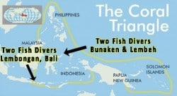 Visit the Coral triangle