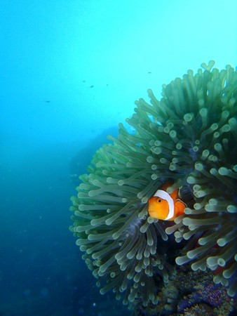 Finding nemo in lembongan