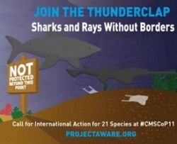 SHARKS AND RAYS WITHOUT BORDERS