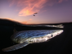 Snapping Prize-Winning Photos