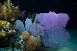 night diving 10 tips
