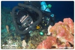 CCR-exploration-diving-bunaken