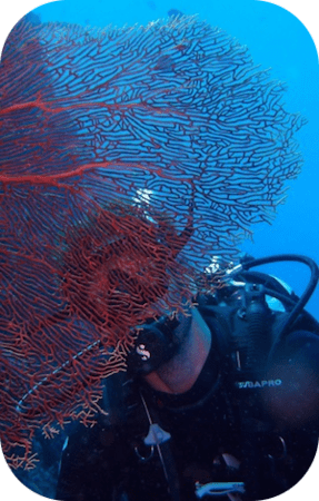 The Adventures of DMT Holger - Ins & Outs of the Divemaster course