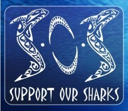 support our sharks
