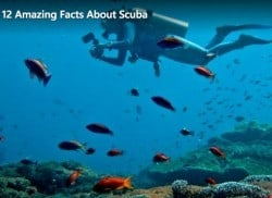 Amazing facts about diving