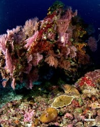 Colourful Coral