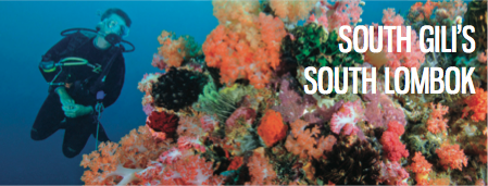 Great corals in south lombok