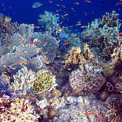 menjangan-marine-park_SM
