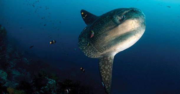 diving-bali-mainland-1