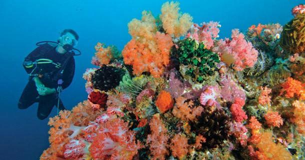 diving-belongas-bay-2