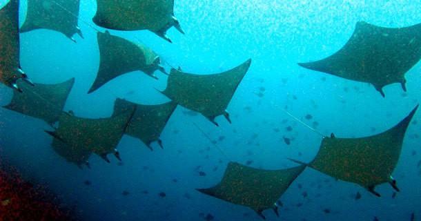 diving-belongas-bay-3