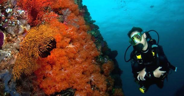 diving-belongas-bay-5