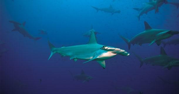 dive south lombok