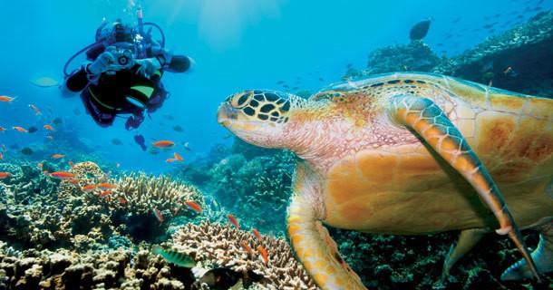 diving bunaken island manado