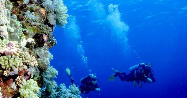 Diving di Dinding Laut Bunaken