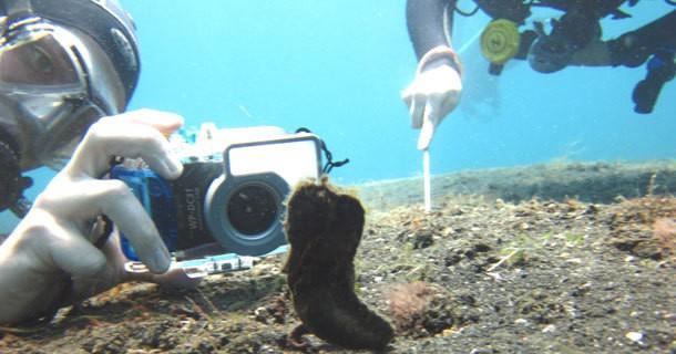 diving-lembeh-manado-1