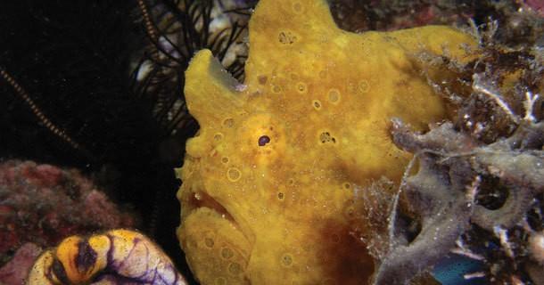 diving-lembeh-manado-3