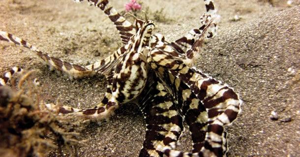 diving-lembeh-manado-4