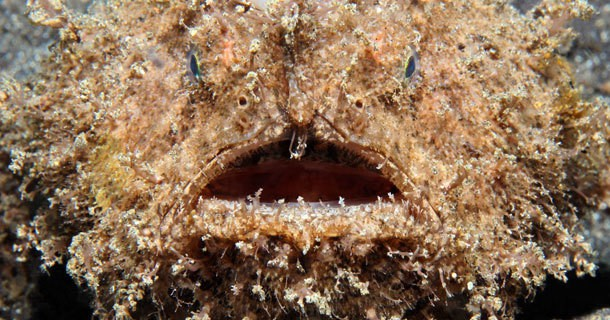 Coll marine life whilst diving in Lembeh