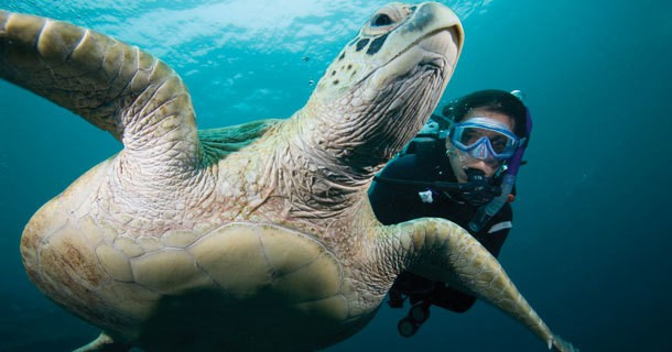 diving-south-gilis-4