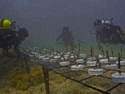 Conservation project Building coral reefs