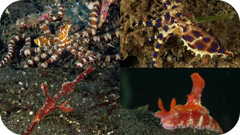 Cool marine life found diving in Lembeh