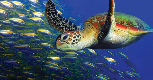 bunaken-reefs