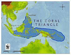 map of coral triangle