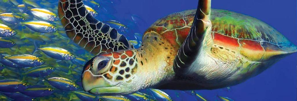 Learn to scuba dive in bunaken